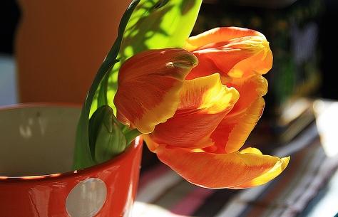 orangetag2