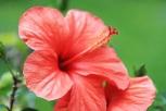 Blütenschlund1