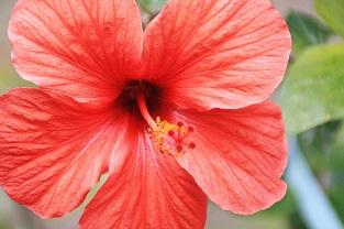 Blütenschlund2