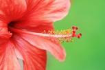 Blütenschlund3