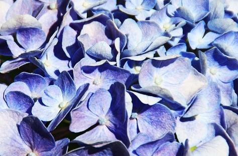 total blau