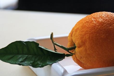 Orangen-Schale