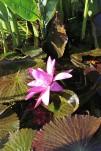 späte Blüte2