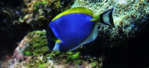 Meeresblau