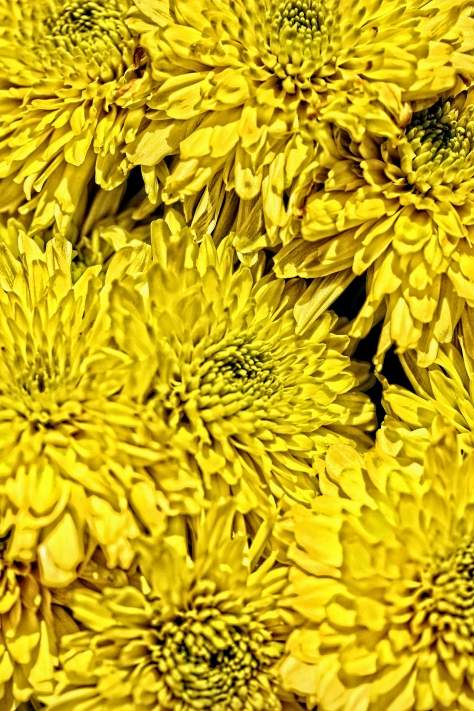 Herbstchrysanthemen