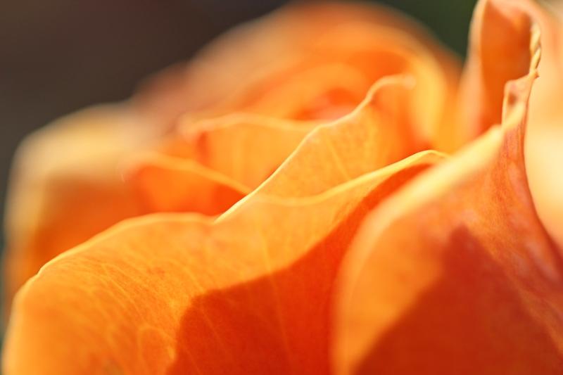 Blütenkleid