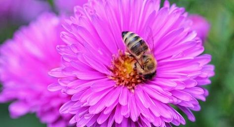 Honigsammlerin