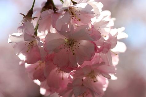 Frühlingsgefühle 3