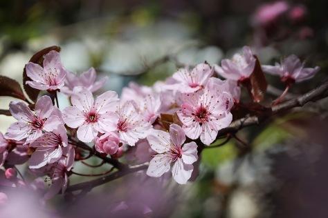 Frühlingsgefühle 1