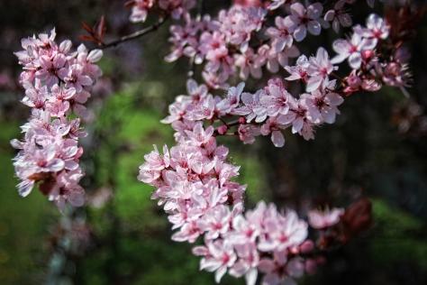 Blütenfülle