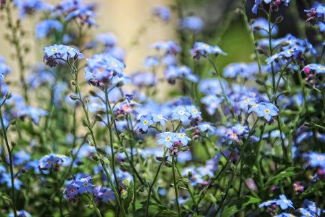 blaue Liebe