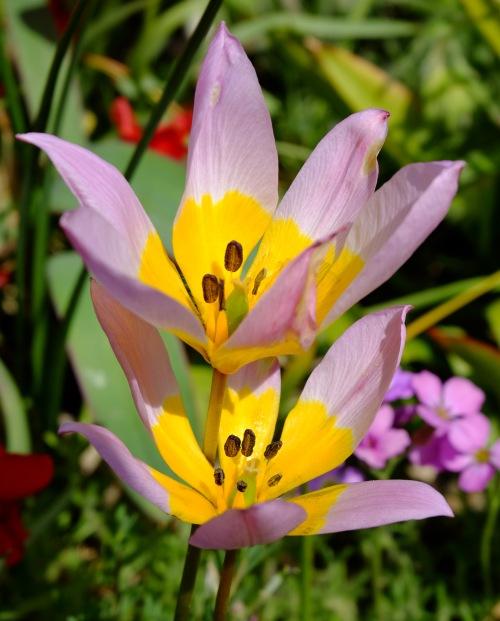 botanisch1
