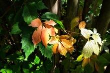 Herbstanfang1 2