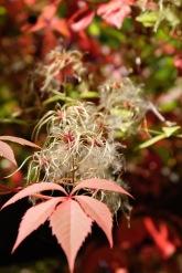 Herbstanfang1 5