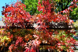 Herbstanfang2 1