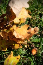 Herbstanfang2 2