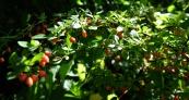Herbstanfang2 3