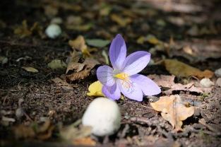 Herbstanfang3 5