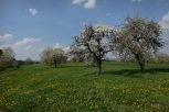 Kirschgärten 4 3