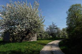 Kirschgärten 4 5