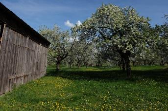 Kirschgärten 4 6