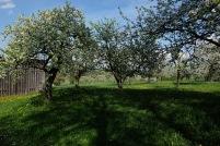 Kirschgärten 4 7