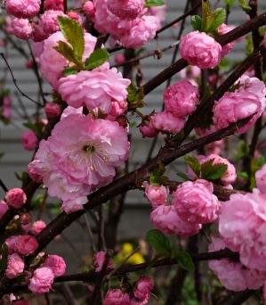 Frühlingsblüten 1 1