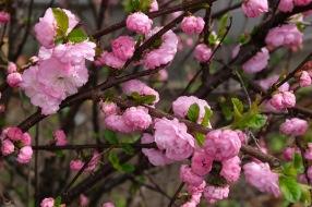 Frühlingsblüten 1 2