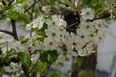 Frühlingsblüten 1 3