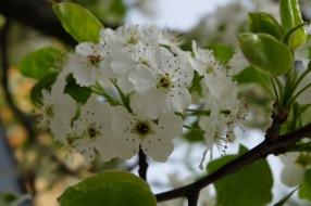Frühlingsblüten 1 4