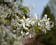 Frühlingsblüten 1 5