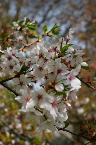 Frühlingsblüten 2 1