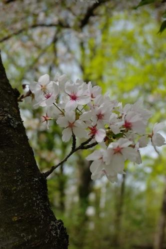 Frühlingsblüten 2 2