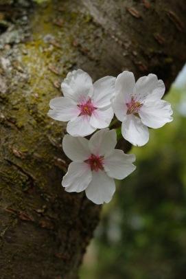 Frühlingsblüten 2 3