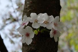 Frühlingsblüten 2 4