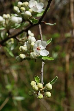 Frühlingsblüten 3 1