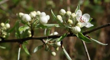 Frühlingsblüten 3 2