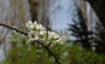 Frühlingsblüten 3 4