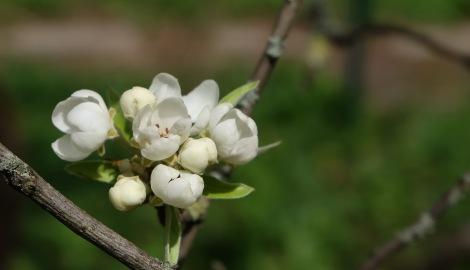 Frühlingsblüten 3 5