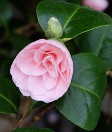Gardenia 3 1