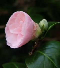 Gardenia 3 2