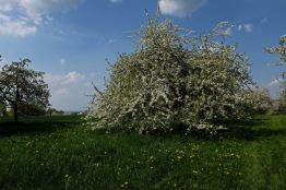 Kirschgärten 1 2
