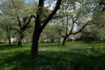 Kirschgärten 1 4