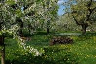 Kirschgärten 1 5