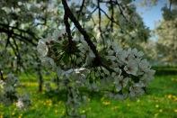 Kirschgärten 1 6
