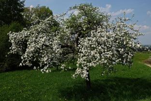 Kirschgärten 3 1