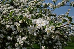 Kirschgärten 3 2