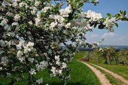 Kirschgärten 3 3