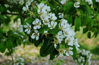 Kirschgärten 3 4