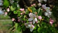 Kirschgärten 3 6